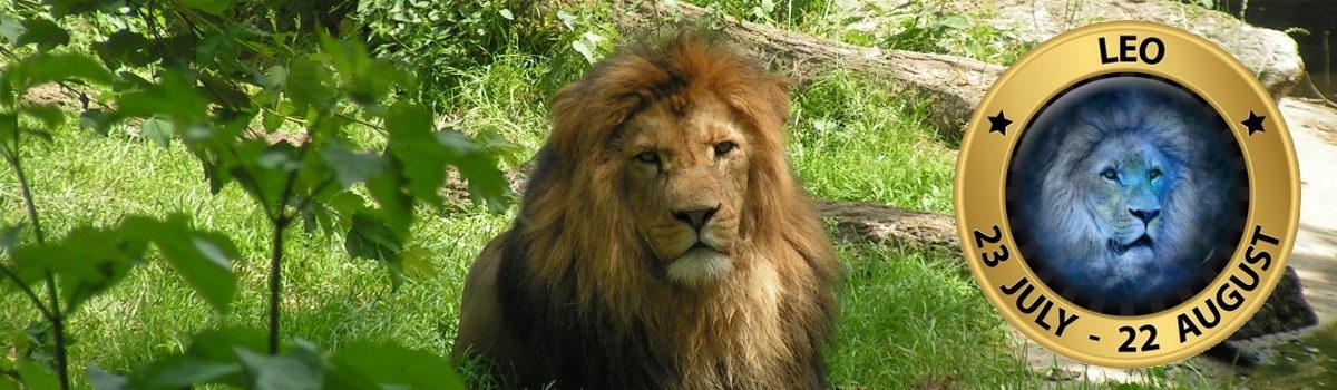 Lion_Sign_4
