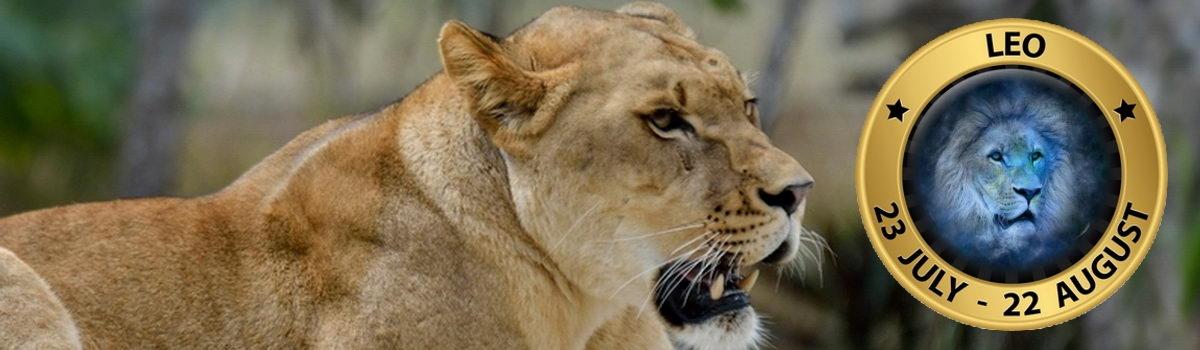 Lion_Sign_5
